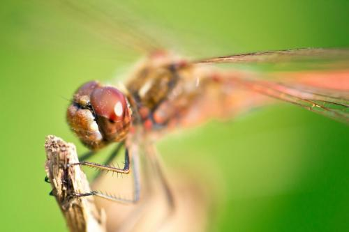 Dragonfly9