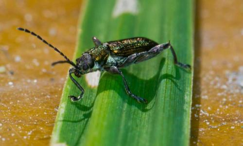 beetle1lr