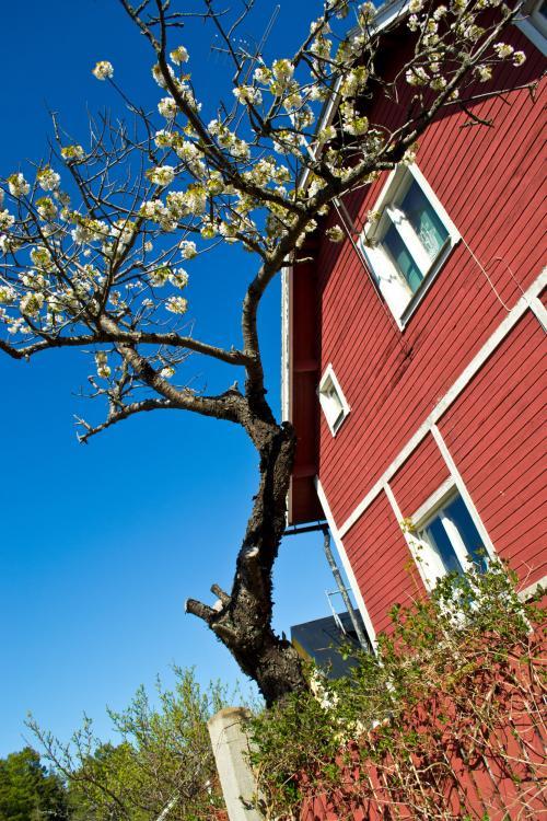 Sandhamn hus