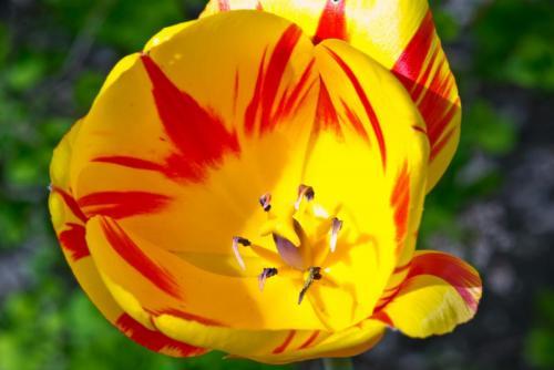 Flower1-2