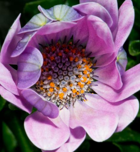 flower16