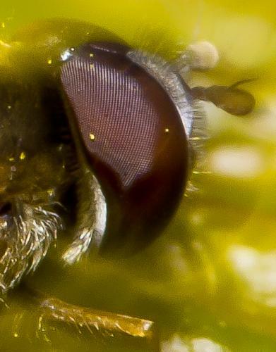 close-up-fly