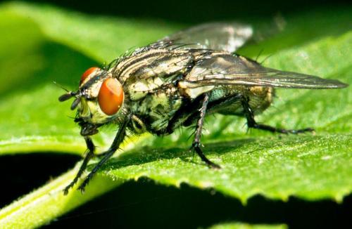 fly1lr