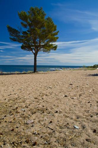 sandhamn-strand1