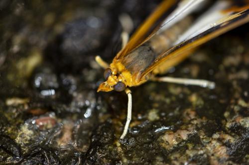 Butterfly53